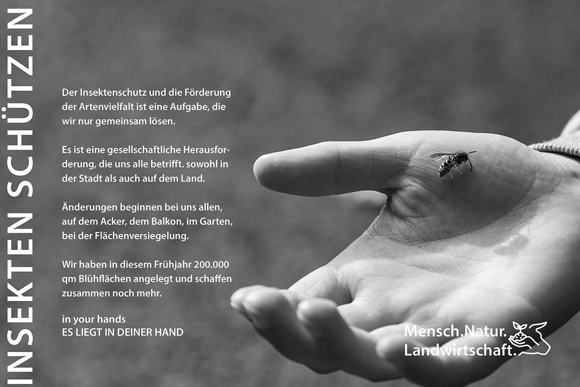 in your hands insekten