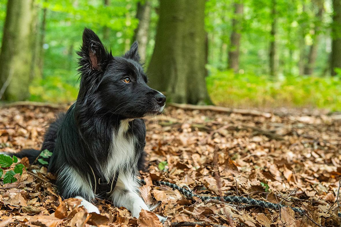 hundefotografie Bremen