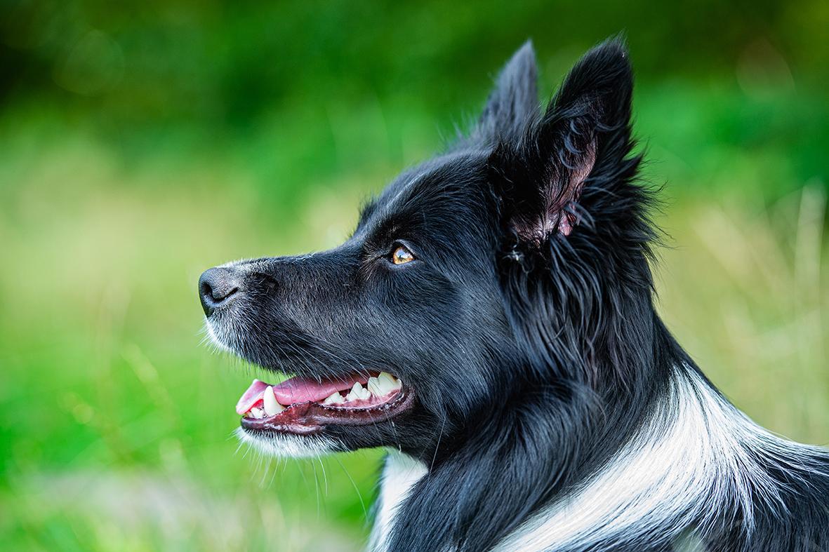hundefotografie aktionfotografie bremen
